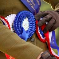 Rosettes won at the RIHS 2014 (c) Samantha Lamb (Large).JPG